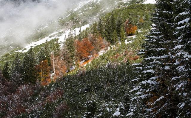 Màu lá úa vàng như tranh vẽ trong ngôi làng Gnadenwald nằm ở phía tây nước Áo.