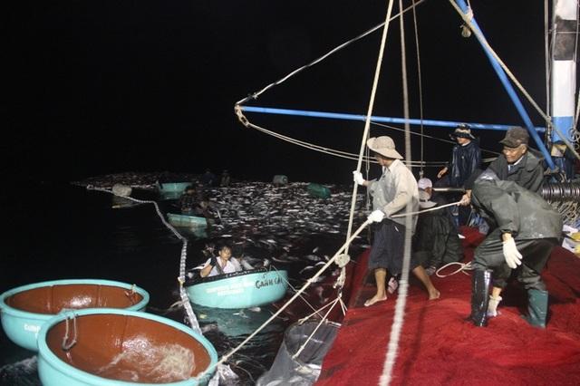 Gần 30 ngư dân khẩn trương thu hoạch mẻ cá bè