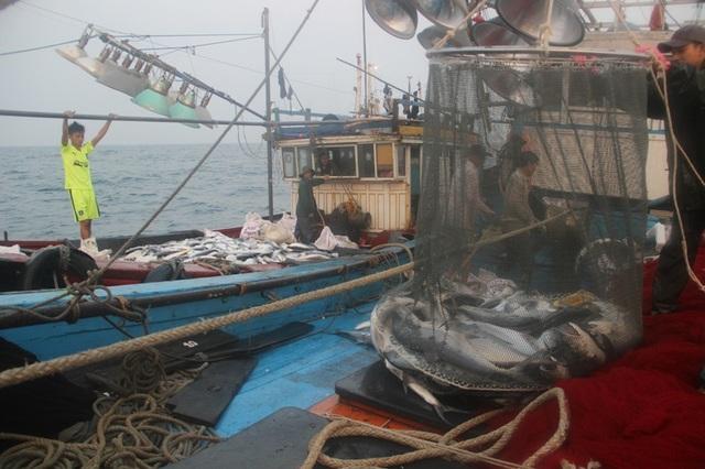 Anh Tuấn đã phải huy động hơn 10 chiếc thuyền để thu cá vận chuyển vào bờ
