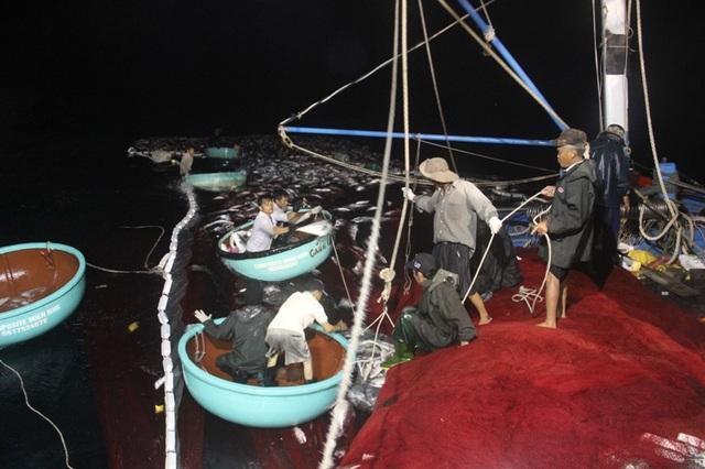 Trên tàu nhìn xuống, mẻ cá bè trắng xóa trong vòng lưới