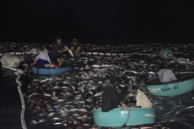 Ngư dân phải sử dụng thuyền thúng ra thu cá