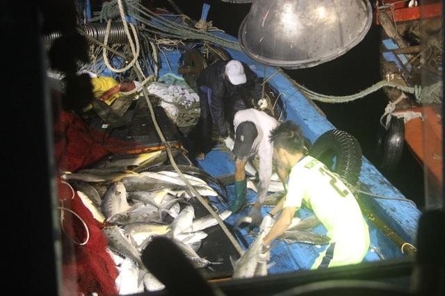Những mẻ cá được đưa lên thuyền và cho vào hầm đông để bảo quản