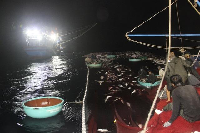 Các thuyền viên sử dụng công cụ thô sơ là thuyền thúng để ra vớt cá trong lưới