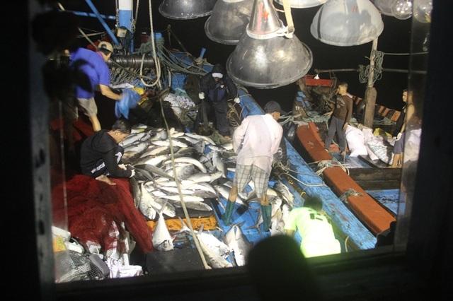 Hơn 150 tấn cá thu được đã mang về cho anh Tuấn hơn 5 tỷ đồng
