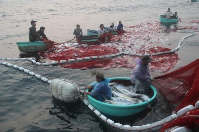 Công việc thu cá được tiến hành suốt đêm và kéo dài đến tận sáng