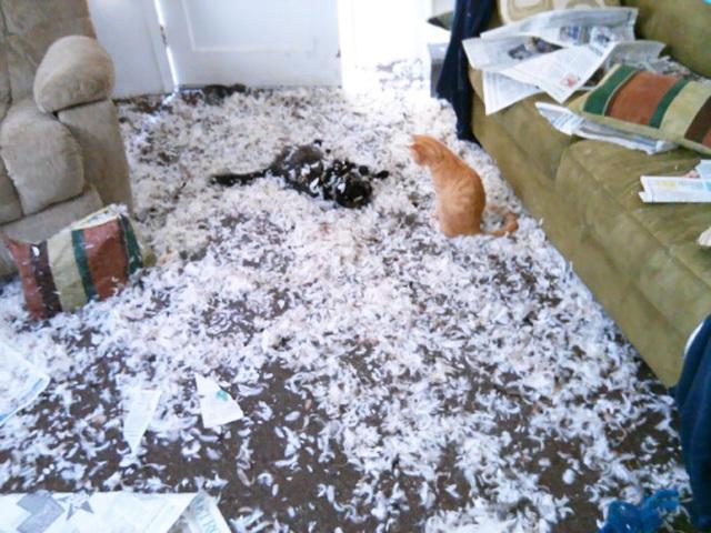 Đây là phòng khách của mẹ tôi sau khi để 2 con mèo quẩn quanh với nhau ở nhà