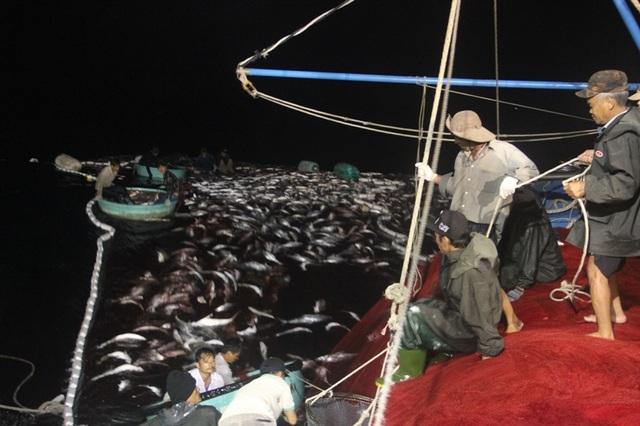 Các thuyền viên phải sử dụng thuyền thúng ra vớt cá trong vàng lưới