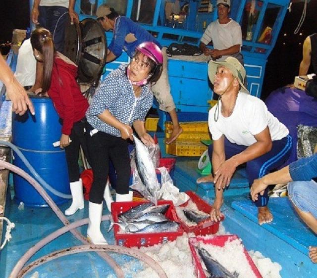 Thu mua hải sản tại Quảng Bình (Ảnh: Tiến Thành)