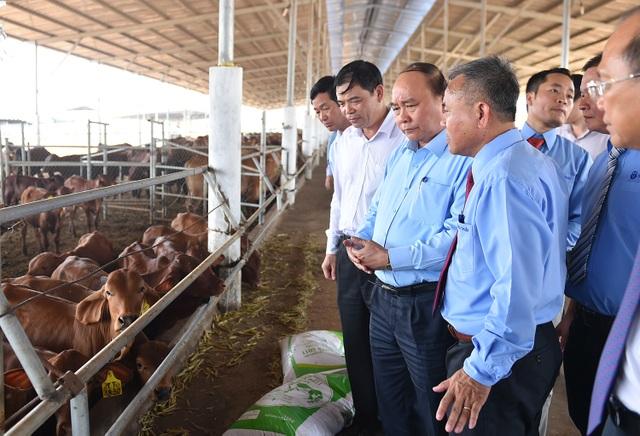 Thủ tướng thăm một trang trại sản xuất phức hợp tại Bình Thuận
