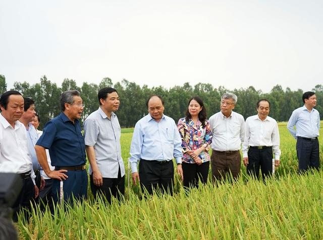 Thủ tướng Nguyễn Xuân Phúc cùng lãnh đạo Bộ NN&PTNT, lãnh đạo tỉnh An Giang đến thăm cánh đồng lúa chất lượng cao của Tập đoàn Lộc Trời