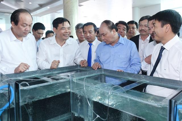 Thủ tướng thăm khu vực trưng bày tôm giống tại một cơ sở sản xuất.