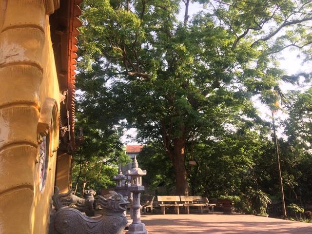 Cành của của cây sưa 400 tuổi lúc đó cũng được định giá lên tới 300 triệu đồng