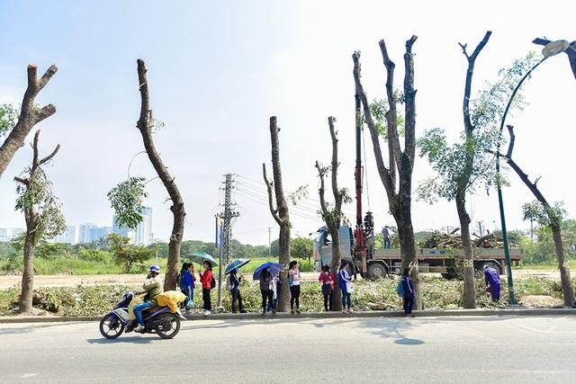 Hàng cây xanh mát dần biến mất, thay vào đó là những thân cây trơ trọi khiến nhiều người tiếc nuối.