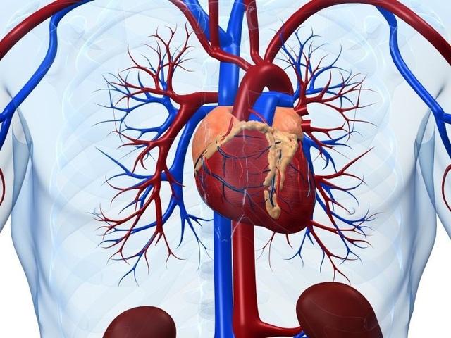 Một trái tim lão hóa có thể làm suy yếu trí nhớ - 1
