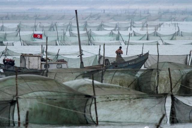 Nghị quyết mới của Liên Hợp Quốc cũng cấm các nước tăng số lao động Triều Tiên đang làm việc ở nước ngoài, cấm các liên doanh mới với Triều Tiên cũng như những hoạt động đầu tư mới trong các liên doanh hiện tại. Biện pháp này được cho là sẽ ảnh hưởng trực tiếp tới lượng tiền do lao động Triều Tiên chuyển từ nước ngoài về nước và tác động tới nền kinh tế nước này. Trong ảnh: Ngư dân Triều Tiên đánh bắt cá trên sông Yalu ở khu vực Sinuiju giáp biên giới với Trung Quốc.