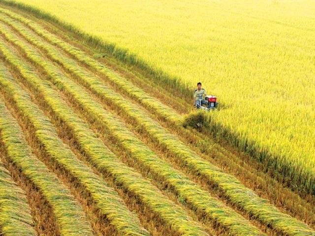 Theo các chuyên gia, cần phải dừng thời kỳ trồng nhiều lúa và chuyển sang thời kỳ tăng GDP