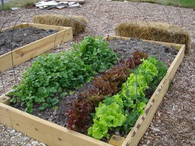 Rau sạch vườn nhà: Bí quyết trồng các loại rau nấu canh - 1
