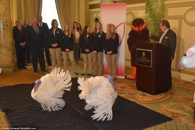 Chủ tịch Hiệp hội Gà tây Mỹ Carl Wittenburg, người đã nuôi dưỡng 2 con gà tây, giới thiệu về chúng tại buổi họp báo trước đó. (Ảnh: Dailymail)