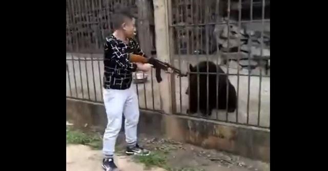 Phẫn nộ du khách Trung Quốc giương súng bắn chết gấu đen.
