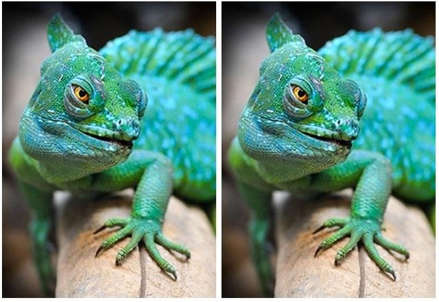 Thử tài tinh mắt: Đố bạn phát hiện điểm khác nhau giữa hai bức tranh - 2