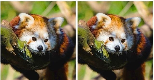 Thử tài tinh mắt: Đố bạn phát hiện điểm khác nhau giữa hai bức tranh - 5