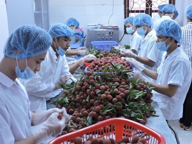 Các mặt hàng nông sản của Việt Nam, nếu có quy trình canh tác chuẩn, đạt tiêu chuẩn của các bạn hàng thì thị trường sẽ tự động được khai thông.