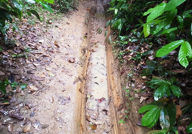 Đường vận chuyển gỗ trong rừng.