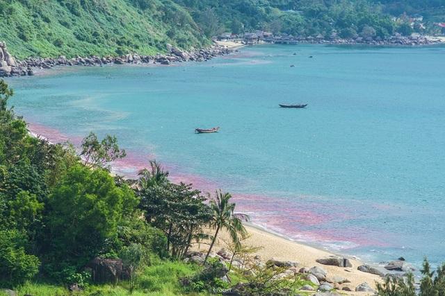Vệt nước màu đỏ trên biển Đà Nẵng thực chất là ấu trùng ruốc hay còn gọi là trứng ruốc (ảnh FB)