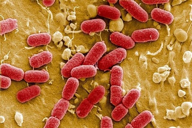 Kháng kháng sinh ở Việt Nam cao nhất thế giới - 1