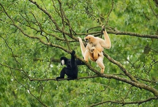 Đến với miền Tây Nghệ An, du khách được khám phá sự đa dạng về hệ sinh thái của Vườn quốc gia Pù Mát (ảnh Vườn quốc gia Pù Mát cung cấp)