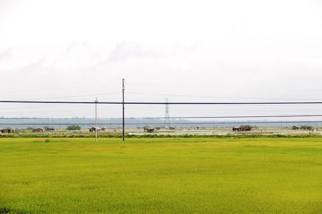 Những hồ nuôi tôm bên cạnh đồng lúa xanh mướt