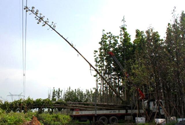 Hiện trường vụ cây dầu chạm vào đường dây điện khiến 18 tỉnh thành mất điện.