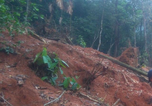 Các đối tượng xới rừng để tìm đá quý tại rừng thuộc xã Xuân Lẹ