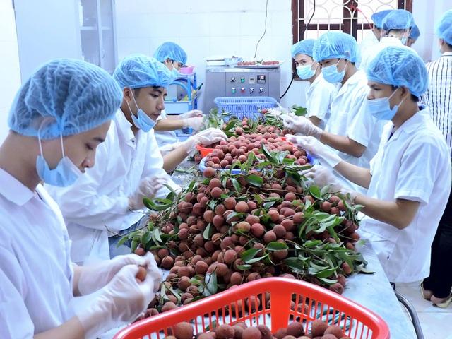 Xuất khẩu rau quả của Việt Nam tiếp tục đem về giá trị lớn hơn các mặt hàng dầu thô, gạo (ảnh minh hoạ)