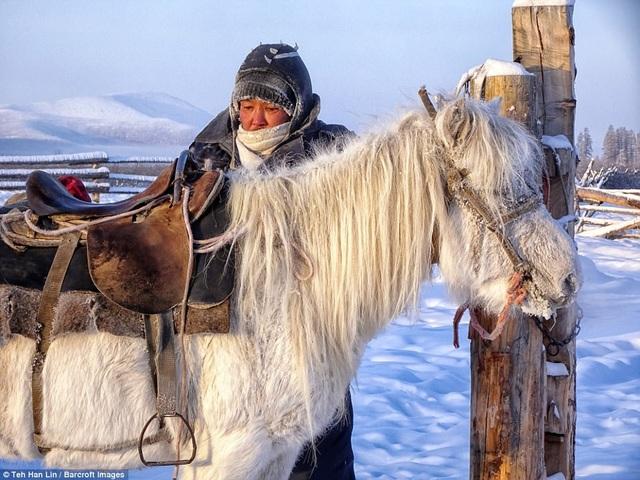 Giống ngựa quý còn là nguồn tài sản lớn của người Yakut