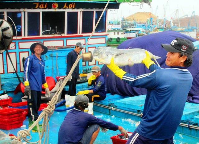 Ngư dân phấn khởi khi trúng đậm các loại cá ngày đầu năm