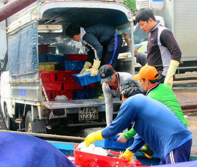 Cá được đưa lên xe đông lạnh để tiêu thụ khắp cả nước và xuất khẩu.