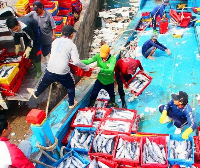 Ngư dân Bình Định trúng đậm cá ngừ sọc dưa ngày đầu năm
