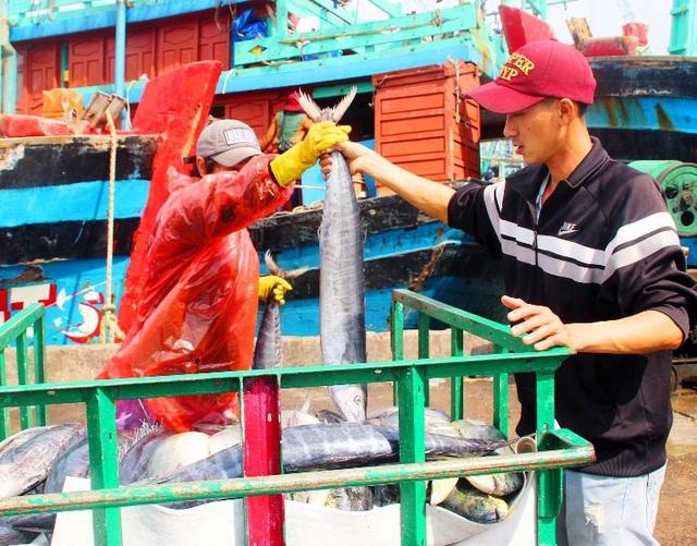 Đầu năm nhiều tàu cá trúng đậm cá ngừ, ngư dân thu tiền tỷ - 6