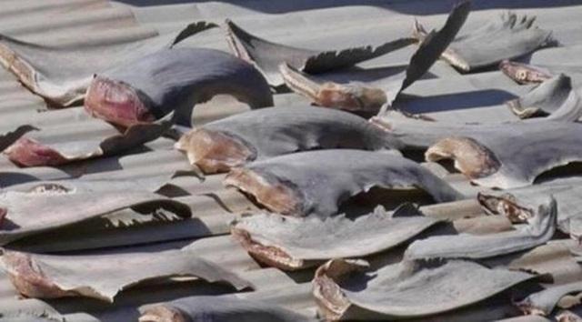 Vây cá mập được phát hiện trên mái nhà tòa đại sứ quán ở Chile.