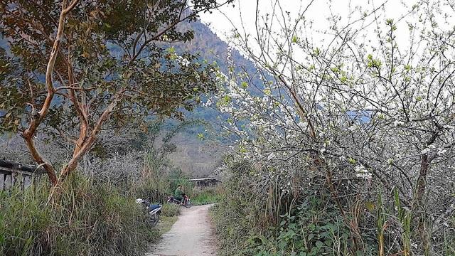 Ngắm tuyệt phẩm hoa ở miền biên viễn xứ Nghệ - 2