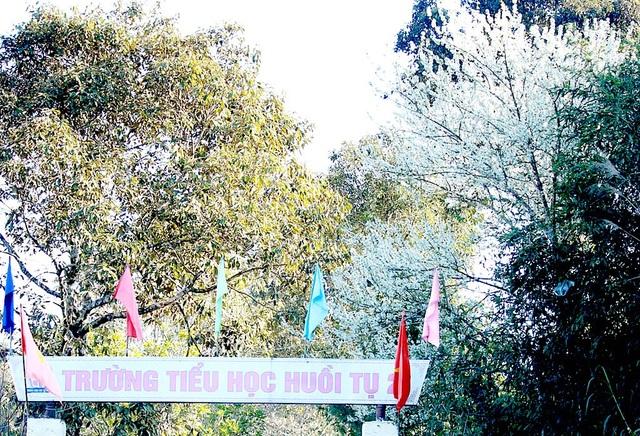 Những ngày cuối năm, tại thung lũng Mường Lống và Huồi Tụ, huyện Kỳ Sơn (Nghệ An) nhuộm trắng sắc hoa mận. Theo người dân nơi đây, dịp này hoa mận đã nở trắng trời ....