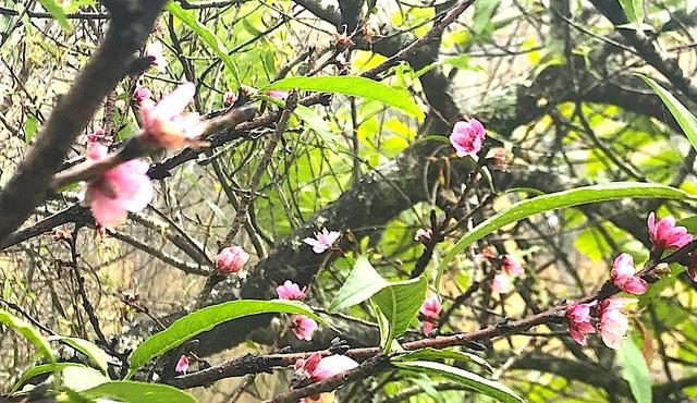 Ngắm tuyệt phẩm hoa ở miền biên viễn xứ Nghệ - 18