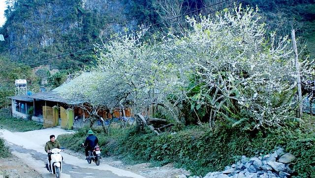 Ngắm tuyệt phẩm hoa ở miền biên viễn xứ Nghệ - 7