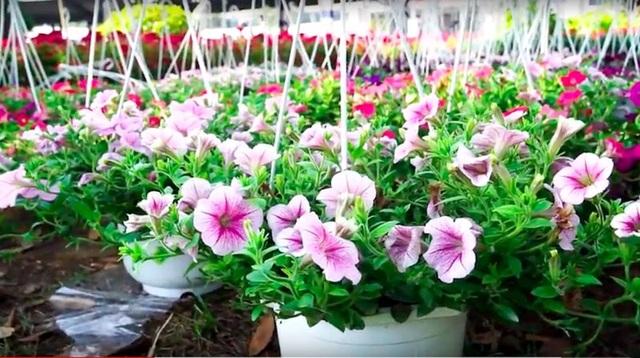 Nghề trồng hoa giúp anh Duy tạo việc làm bền vững cho nhiều lao động địa phương