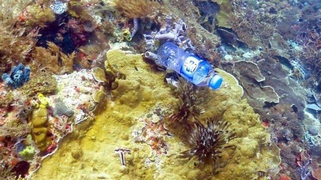 """Một phần ba các rạn san hô """"bị nhựa vướng vào"""" - 1"""