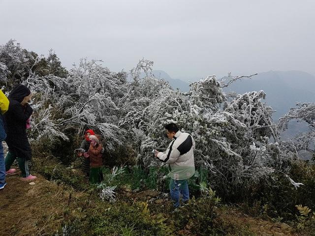 Hình ảnh băng giá tuyệt đẹp ở đỉnh Mẫu Sơn - Lạng Sơn - 2