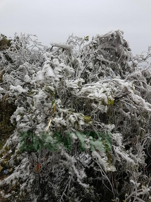 Hình ảnh băng giá tuyệt đẹp ở đỉnh Mẫu Sơn - Lạng Sơn - 4
