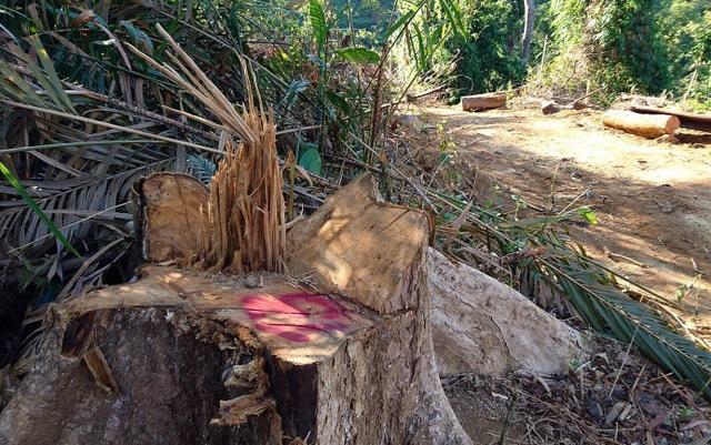 Vụ phá rừng tại Tiểu khu 341, xã Chà Vàl
