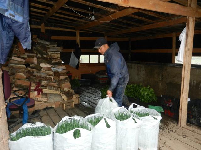 Một công nhân chuẩn bị giao hành lá cho khách đặt hàng (Ảnh: Võ Hoài Nam)